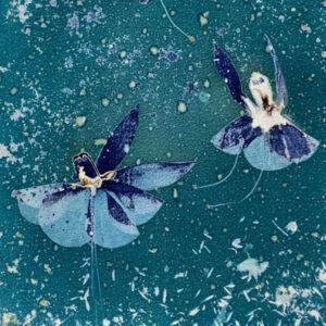 Fine Art Prints - Cyanotype